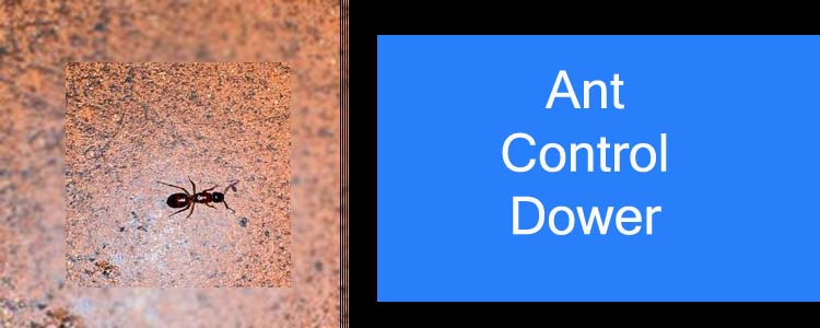 Ant Control Downer
