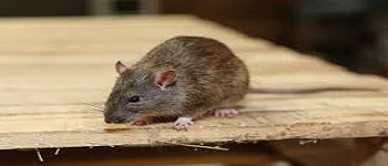 Rodent and Mice Control Downer
