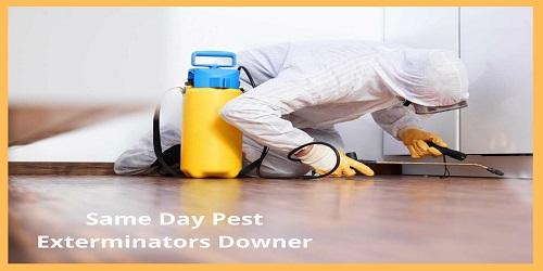 Same Day Pest Exterminators Downer